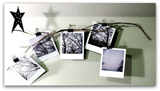 PhotosBranches